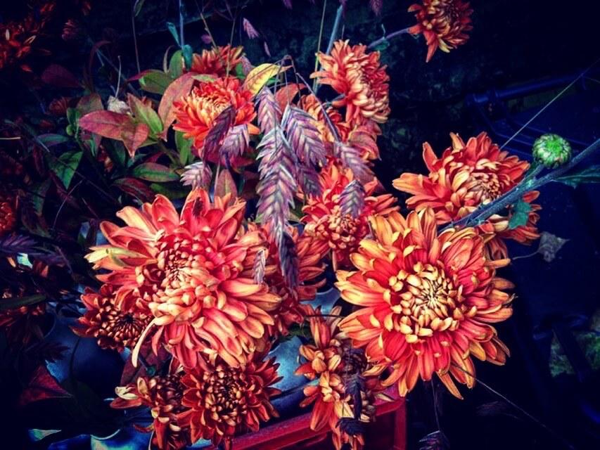 bloemisterij bloemkracht8 amelisweerd
