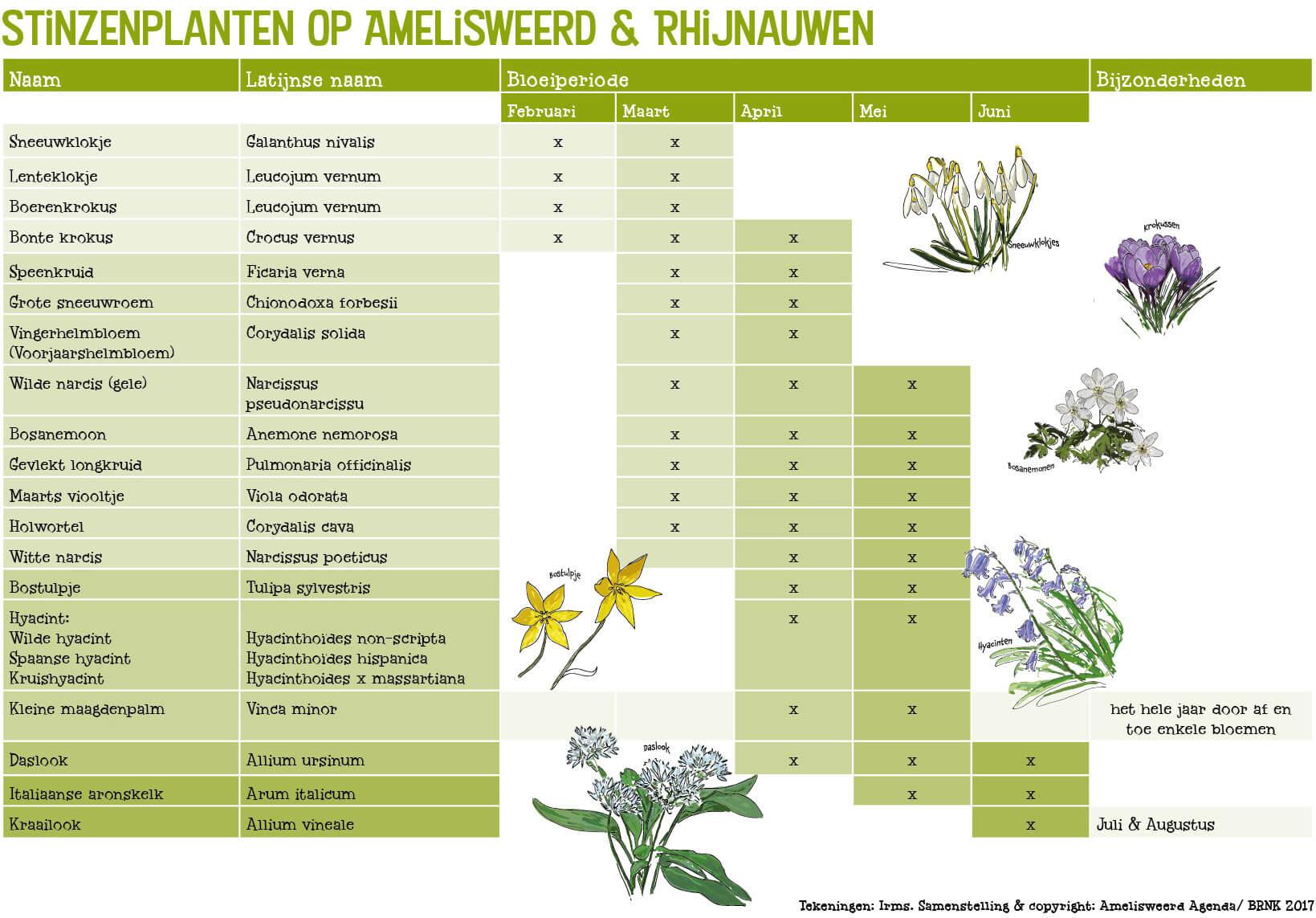 Stinzenplanten Amlisweerd Agenda