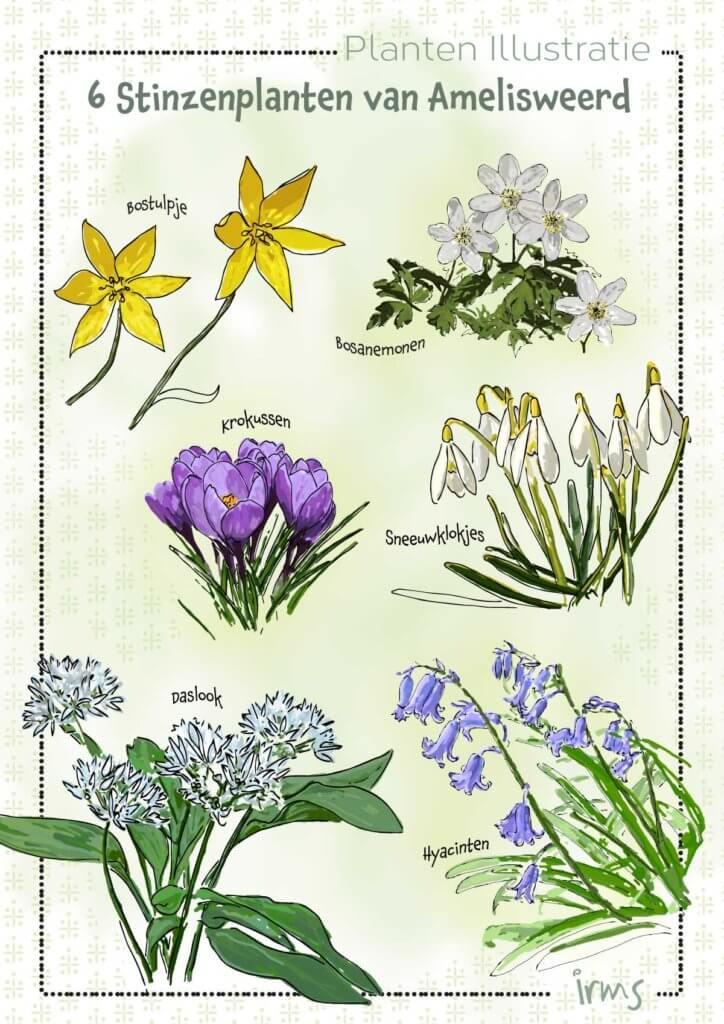 Amelisweerd-Agenda-Irms-stinzenplanten
