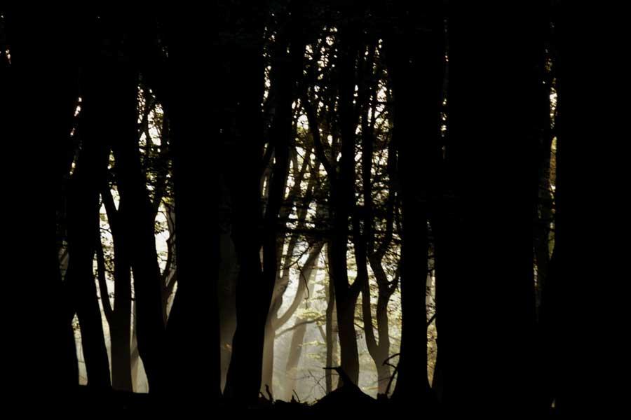 Staatsbosbeheer Nacht van de Nacht