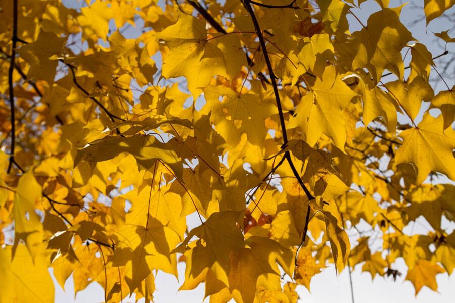 herfst bladeren staatsbosbeheer
