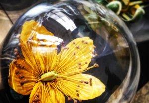 MOA Flower Power