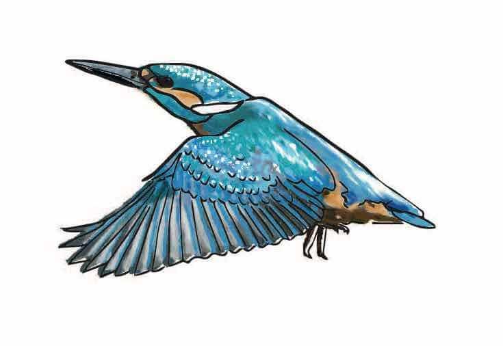 IJsvogel Fort bij Rijnauwen