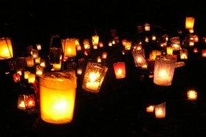 Lichtjeswandeling-staatsbosbeheer