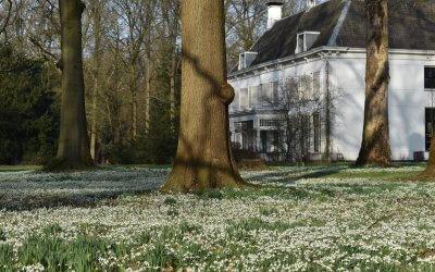 Stinzenplanten op Amelisweerd: bijna voorjaar!