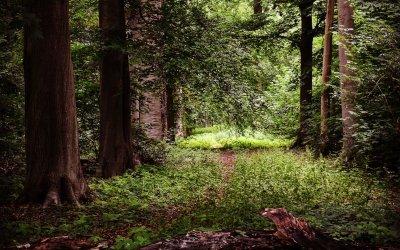 Natuurlijke rust op de landgoederen