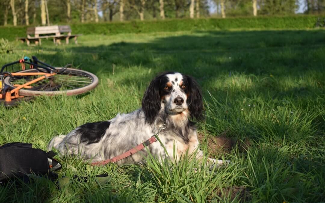 Honden los op Amelisweerd? Doe maar niet…