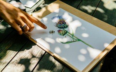 Workshop Botanisch Illustreren op Amelisweerd