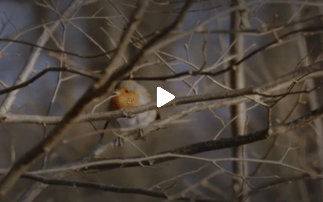 Amelisweerd in Zembla-uitzending