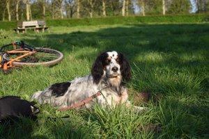 Hond aan de lijn op Amelisweerd